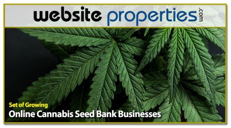 Set Of Growing Online Cannabis Seed Bank Businesses