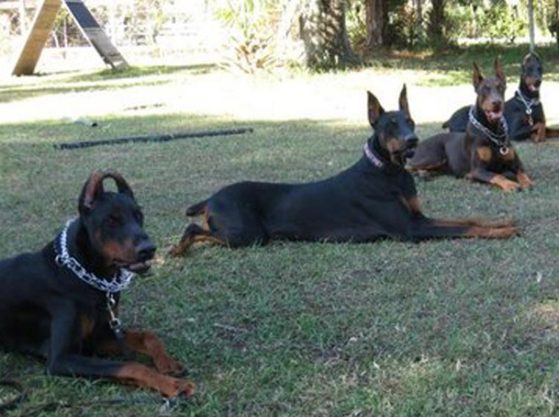 Profitable Dog Training & Boarding Academy
