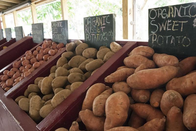 Profitable Organic Farmers Market