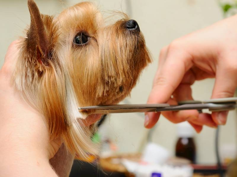 Pet Grooming Salon For Sale, $88,000